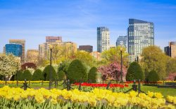 Boston Public Gardens near Inn at Longwood Medical